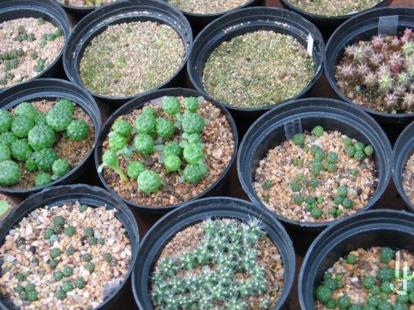 Varios semilleros en diferente estado de crecimeinto.