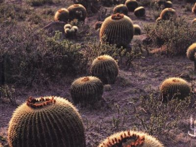 "Portada del libro ""The Cactus Family"" de Edward F. Anderson"