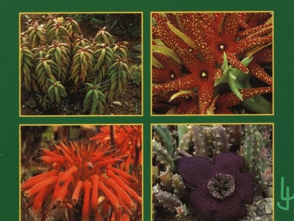 Portada libro Succulents, The illustrated Dictionary II. Por Maurizio Sajeva y Mariangela Costanzo