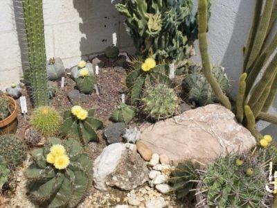 Jardín de cactus de mi casa.
