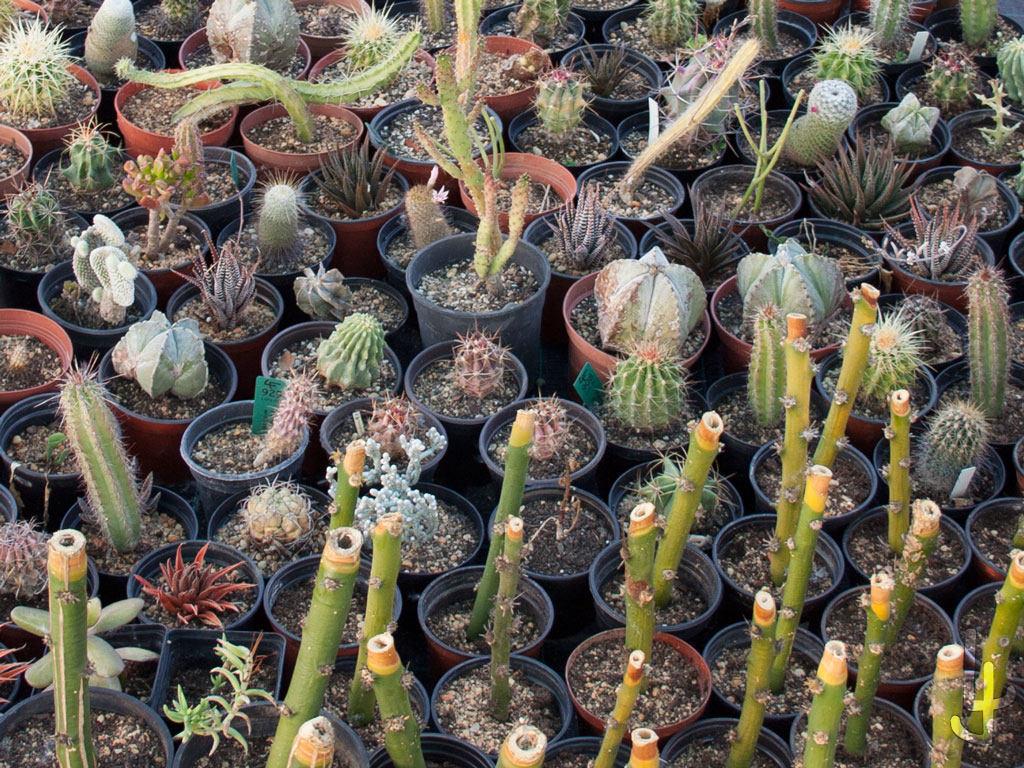 Plantas suculentas en macetas no uniformes.
