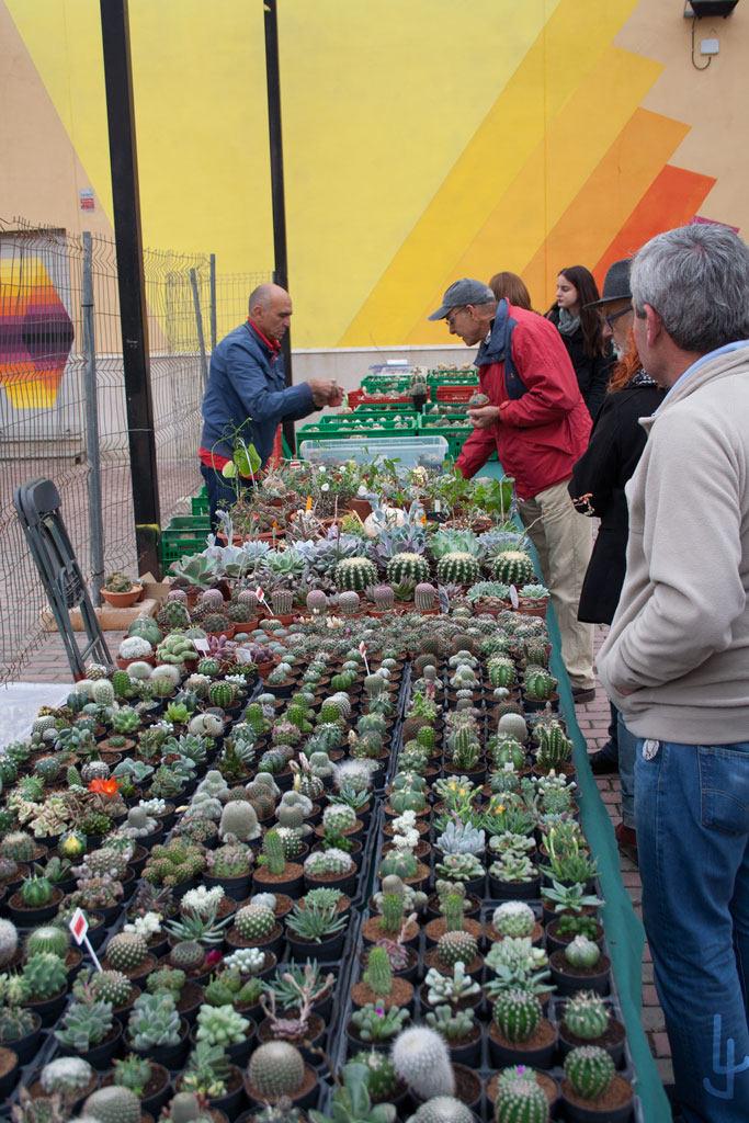 XII Congreso Cheste Cactus y Suculentas. José Mª Ornatum